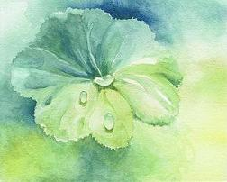 Alchemilla - Lady's Mantle watercolor painting by Judy Fletcher